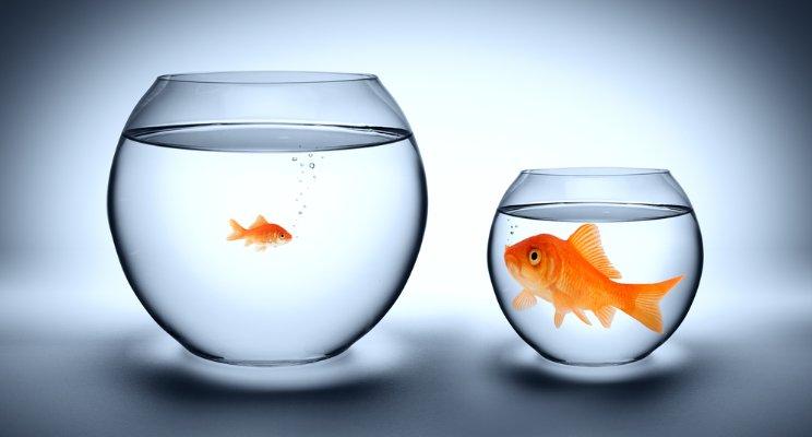 Dating Pond Big Site Fish Small lansing jose